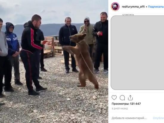 В сети появилось видео того, как Хабиб Нурмагомедов бьет медвежонка