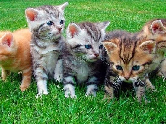 Китайцы начали массово вывозить из России кошек и собак