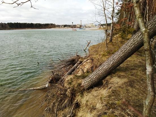 Карьер около посёлка имени Космодемьянского нанёс ущерб лесам на 700 миллионов рублей