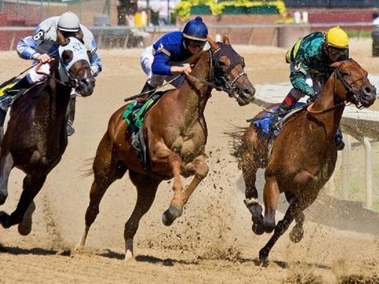 Главным призом калмыцких конных скачек станет автомобиль