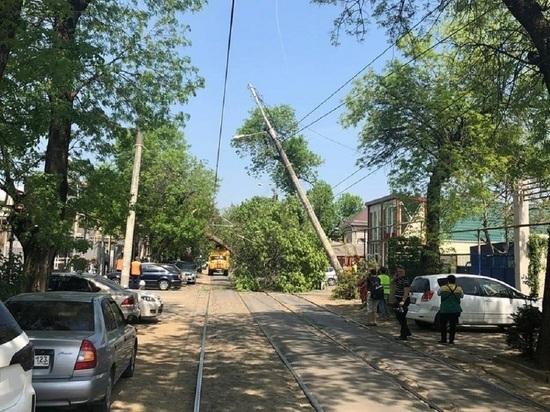 Упавшее дерево в Краснодаре повредило трамвайные провода четырёх маршрутов