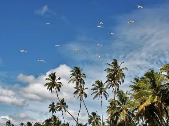 Теракты Шри-Ланки могут повториться на других курортах: куда не стоит лететь