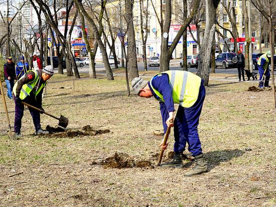 Посадку молодых деревьев заканчивают на улицах Хабаровска