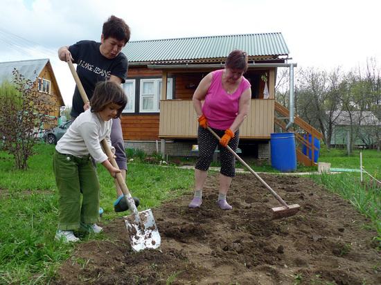 Россиянам отсоветовали сажать картошку на майские