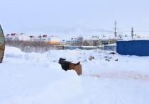 В Ноябрьске нашли труп пропавшего в феврале мужчины