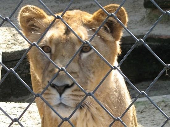 В Магасе запретили цирки-шапито с животными