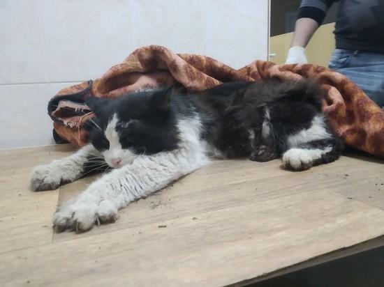 В Рязани спасли кота, которого сбила машина