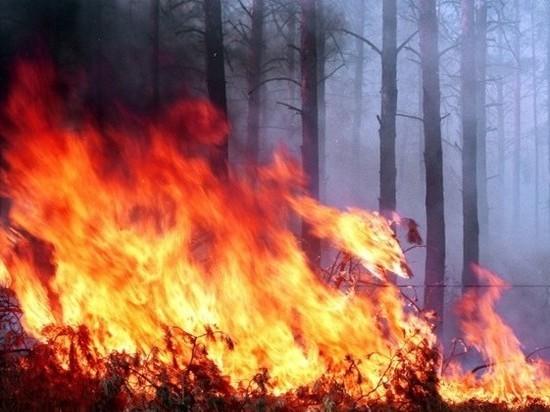 Чрезвычайную пожарную опасность прогнозируют в Приаргунском районе