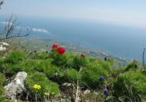 Айда на море, в парк и в лес: прогноз погоды в Крыму на 5 мая