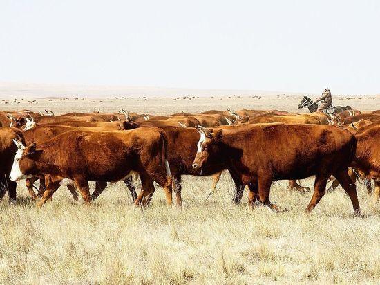 Калмыцкие фермеры получат 207 миллионов на развитие