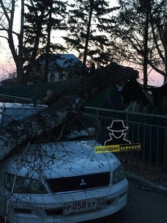 В барнаульском Нагорном парке упало дерево на иномарку