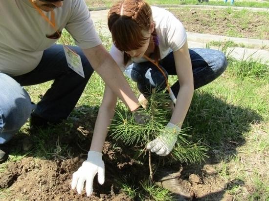 Сотни деревьев высадят в Хабаровске
