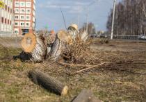 Кто-то варварски расправляется с зелеными насаждениями в Кемерове