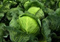 Стоимость овощей на отечественных прилавках поражает воображение — продукты дорожают ощутимо быстрее инфляции