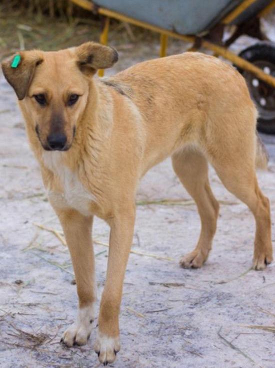Изувеченную собаку волгоградские ветеринары спасали от смерти 5 раз
