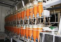 Власти  Югры совместно с нефтяными компаниями восстанавливают популяцию сибирского осетра