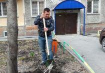 Депутат высадил деревья в десятках новосибирских дворов