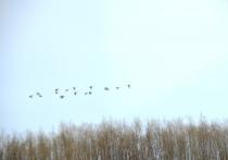 Первые цветы и перелетные птицы появились на Ямале