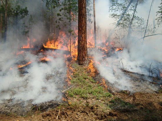 Полпред Меняйло заявил, что в «Заповедном Прибайкалье» нет денег на тушение пожаров