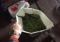 В Тверской области оперативники наркоконтроля задержали дилера