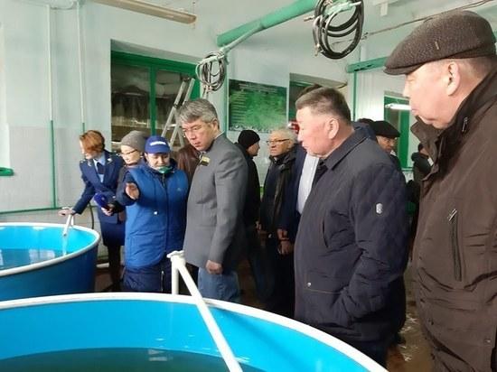 Глава Бурятии выпустил в Байкал миллионы молоди омуля