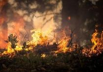 Более 29 тыс га леса горят в трех районах Забайкалья