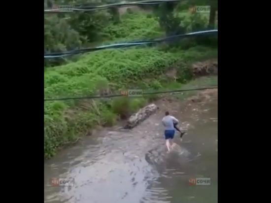В Сочи мужчина спас заплывшего в местную реку дельфина