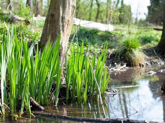 Волгоградский агроном рассказал, как уберечь растения от вымокания