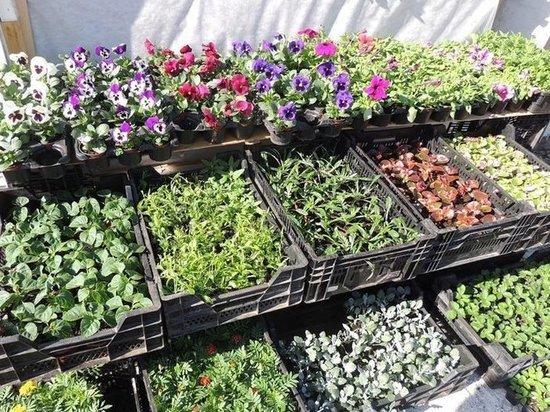 Качеством продаваемых в Иванове семян заинтересовались в Россельхознадзоре