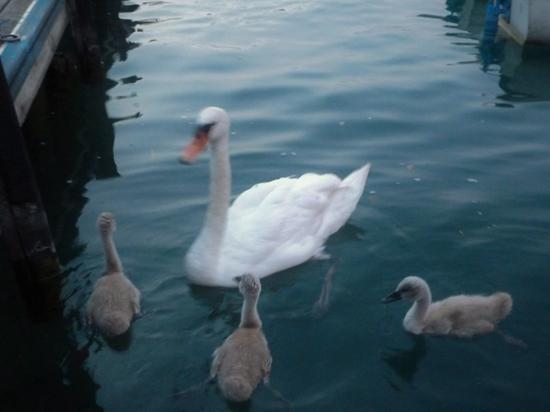 Но за благородными птицами можно понаблюдать на других водоемах Москвы
