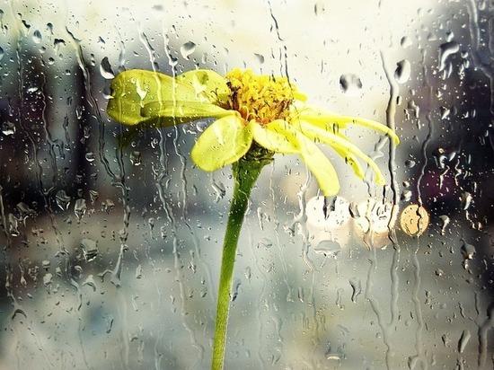 С дождей и гроз при +24°С начнется рабочая неделя для волгоградцев