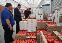 В Ингушетии собрали первый урожай томатов на агрокомплексе «Сунжа»
