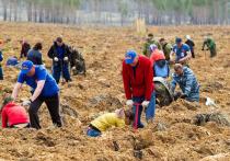 В Бурятии пройдет Всероссийский день посадки леса