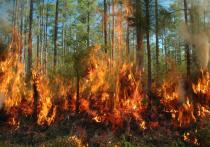 Больше 7 тысяч гектаров леса горит в Забайкалье