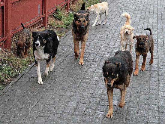 В Новороссийске свора собак покусала ребёнка