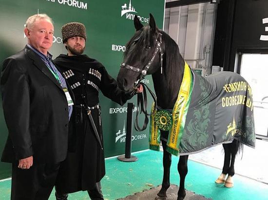 Жеребцы с Кубани стали призёрами престижной выставки лошадей