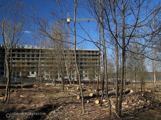 Новый сквер появится в Петрозаводске к концу мая