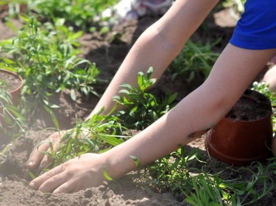 Летом саранские школьники смогут потрудиться на благо города