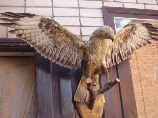 Два ульяновца украли из дачного дома чучела кабана, косули и ястреба