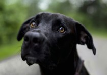 В Тверской области хозяева убили своего пса Байкала из-за бешенства
