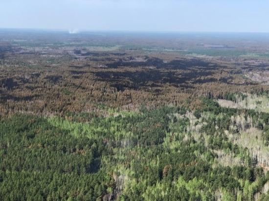 13 курганским семьям, чье жилье сгорело в результате природных пожаров, начали оказывать помощь