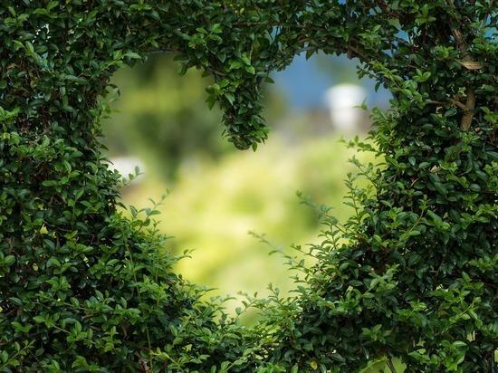 Стали известны 8 способов защиты сердца