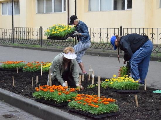 В Иванове высадят 135 тысяч цветов