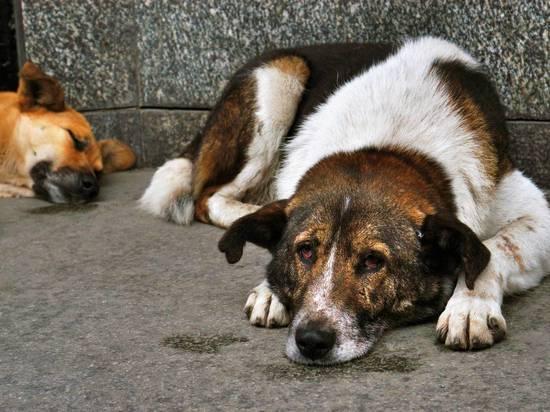 Бродячие собаки в Юхнове отправились в питомник