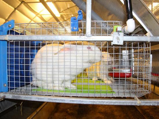 На деньги гранта в Щербиновском районе Кубани открыли кролиководческую ферму