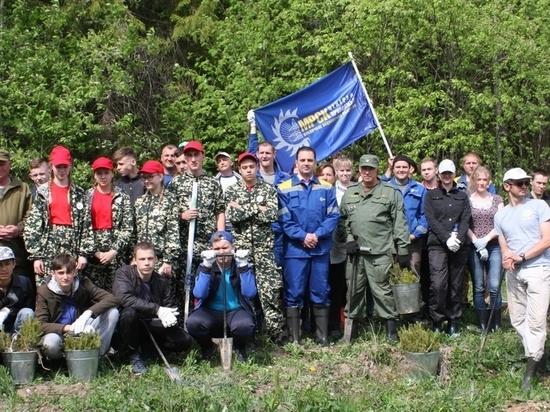 Энергетики «Ивэнерго» присоединились к Всероссийскому дню посадки леса