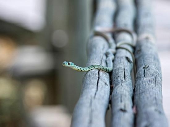 7 правил, которые помогут избежать укуса змеи