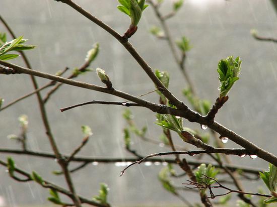 Ливневые дожди выплеснули на ЦФО больше нормы осадком
