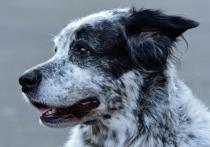 Забайкалье - в числе пяти субъектов РФ, где собак отлавливают ветеринары