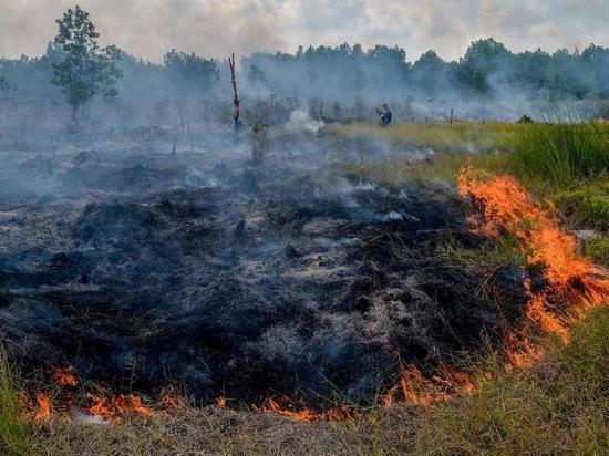 В Красноярском крае по неосторожности подожгли пустырь